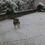 愛犬カルビ